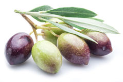Fresh olives with leaves. royalty free stock image