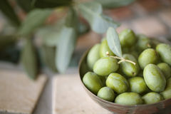 Fresh Olives. Still Life with Fresh green Olives harvested from Tree on Italian Farm Stock Photos