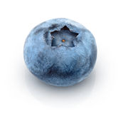 Fresh one blueberry Stock Photography