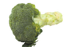 Fresh one green broccoli Royalty Free Stock Image