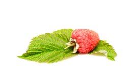 Fresh one raspberry on a white. Stock Photo