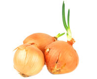Fresh onion. Stock Image
