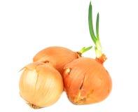 Fresh onion. Stock Image