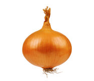 Fresh onion Royalty Free Stock Photos