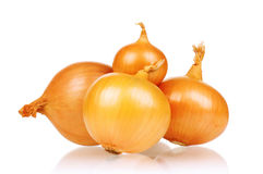 Fresh onion Royalty Free Stock Image