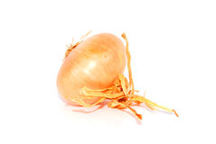 Fresh onion Stock Images