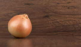 Fresh onion bulb Stock Photography