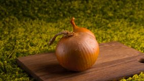 Fresh onion bulb on wooden background . Vegetables for a healthy diet. Bulb onion is rich in vitamins, useful spring. Onion peel o royalty free stock image