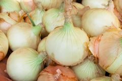 Fresh onion bulbs group or allium cepa texture nature patterns background royalty free stock photography