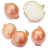 Fresh onion bulbs set  Royalty Free Stock Image
