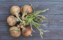 Fresh onion bulbs Royalty Free Stock Image