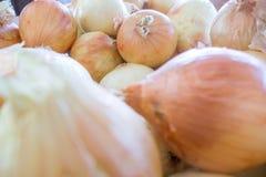 Fresh onion farm display Stock Photography
