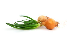 Fresh onion with green sprouts Stock Photography