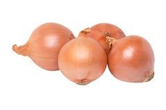 Fresh onion Group Royalty Free Stock Photos