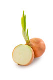 Fresh Onion isolate on white background Stock Images