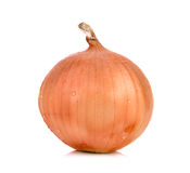 Fresh Onion isolated on white background Royalty Free Stock Photos
