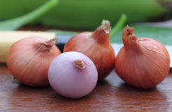 Fresh onion with other ingredients Royalty Free Stock Image