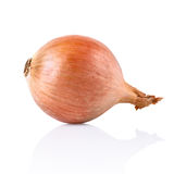 Fresh onion with reflection Stock Image