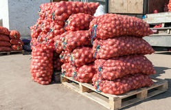 Fresh onion for sale at the agricultural market Royalty Free Stock Photos