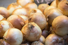 Fresh onions Stock Photography