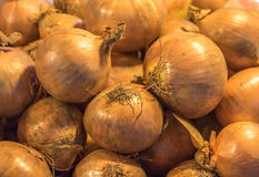 Fresh onions background Stock Image