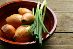 Fresh onions green and shallot Royalty Free Stock Image