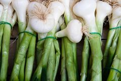 Fresh onions at a market in Paris France Royalty Free Stock Image