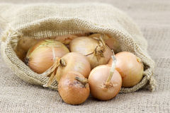Fresh onions in package Stock Photo