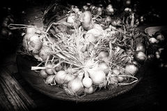 Fresh onions in rustic setting Stock Photo