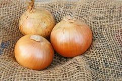 Onion. Fresh onions vegetables isolated on Hemp Stock Photos