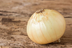 Fresh onions vegetables on wooden table Stock Photography