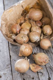 Fresh Onions from the weekly market Royalty Free Stock Photography