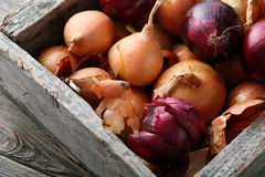 Fresh onions in wooden crate. Food closeup stock photography