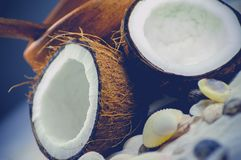 Fresh Open Coconut Royalty Free Stock Photo