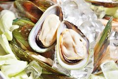 Fresh oysters on the ice Royalty Free Stock Photography