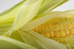 Fresh opened Corn Cob Stock Photos