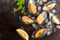 Fresh opened mussels on ice. Prepared for cooking dinner seafood - fresh opened mussels on ice, on black concrete table, with lemon and seasonings. Top close Royalty Free Stock Image