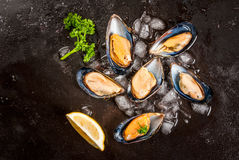 Fresh opened mussels on ice. Prepared for cooking dinner seafood - fresh opened mussels on ice, on black concrete table, with lemon and seasonings. Top view Royalty Free Stock Images