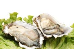 Fresh opened oyster. On white background Stock Photography