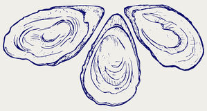 Fresh opened oyster. Doodle style Royalty Free Stock Photos