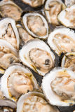 Fresh opened oyster for eat Stock Image