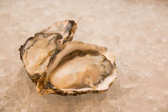 Fresh opened oyster. Isolated on a ice Stock Photography
