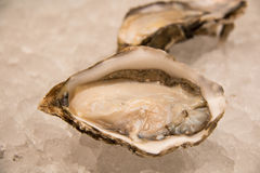 Fresh opened oyster. Isolated on a ice Royalty Free Stock Photo