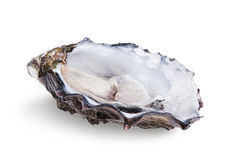 Fresh opened oyster Royalty Free Stock Photos
