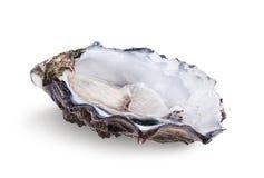 Fresh opened oyster. Isolated on white background Royalty Free Stock Photos