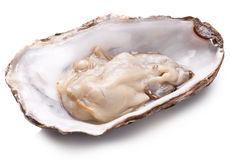 Fresh opened oyster. Stock Image