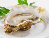Fresh opened oyster. S on a white plate. Selective focus Royalty Free Stock Image
