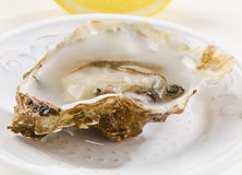 Fresh opened oyster. S on a white plate. Selective focus Royalty Free Stock Photography