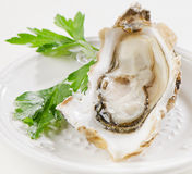 Fresh opened oyster. S on a white plate. Selective focus Stock Photography