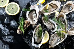 Fresh opened oyster with sliced lemon offered as top view on crushed ice with copy space royalty free stock photos